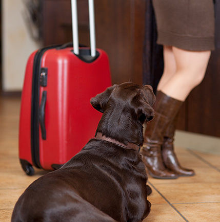 We have rooms dedicated to your 4-legged friends